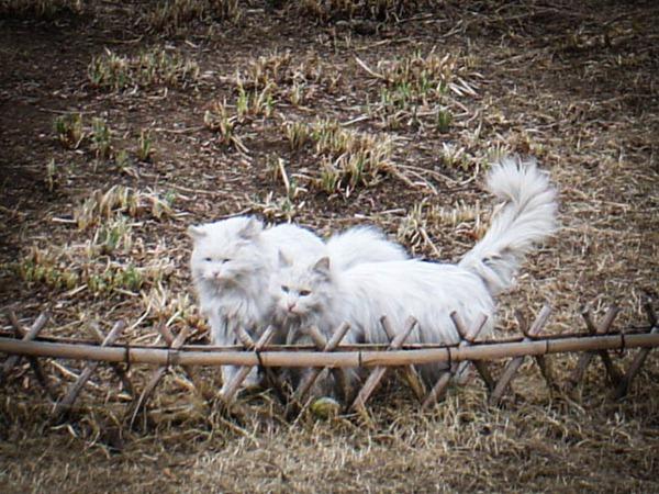 动物园的流浪猫